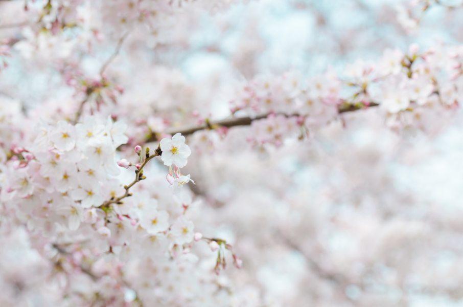 bloom-blooming-blur-71859