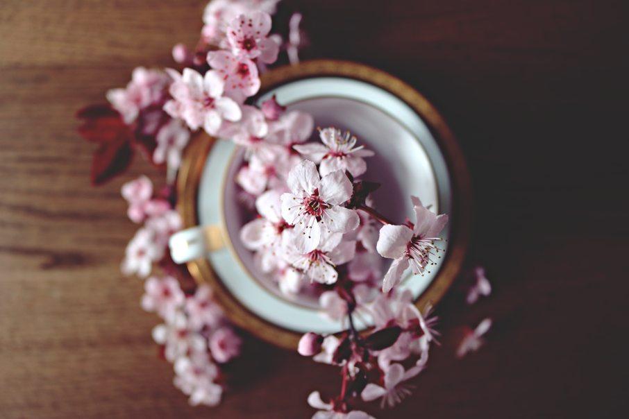 beautiful-bloom-blooming-371433