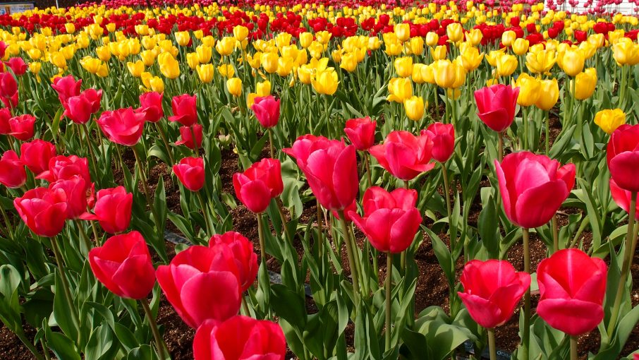 bloom-blossom-flora-103573